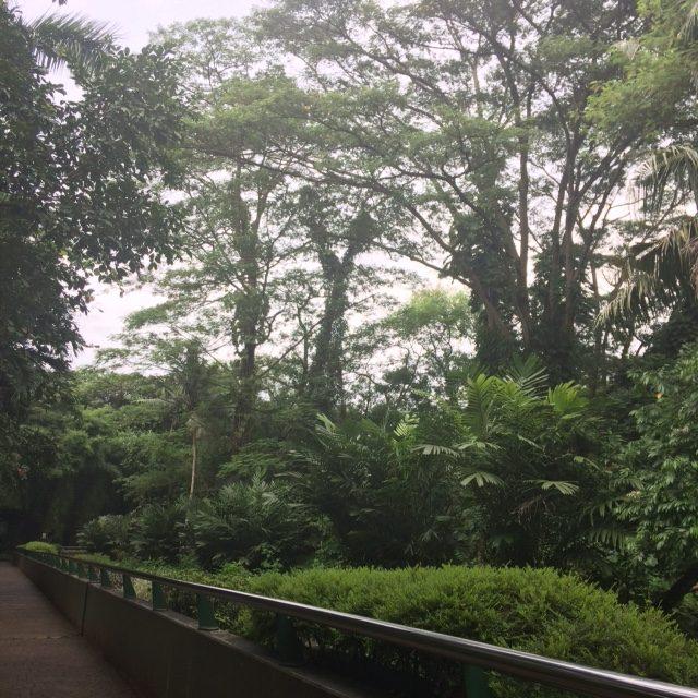 Pohon di Ragunan